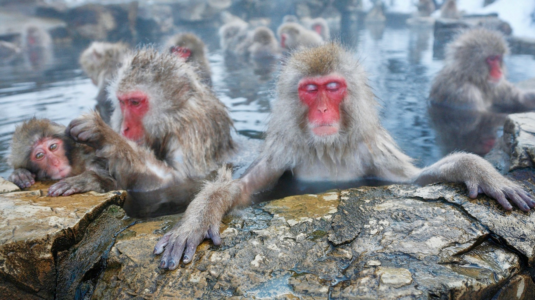 Japan's Popular Bathing Monkeys, Healthy Living + Travel