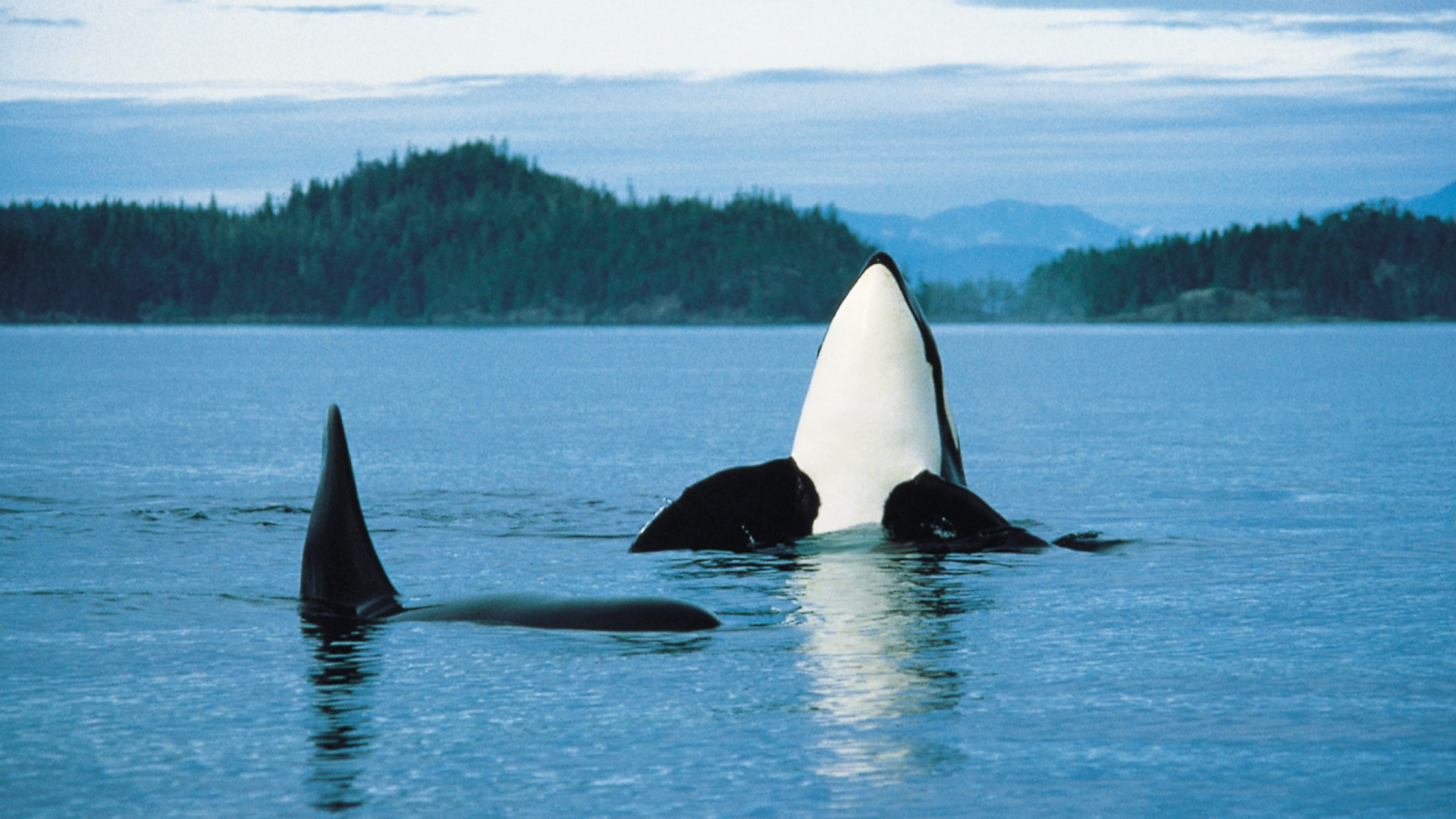 Spas of Vancouver Island, Healthy Living and Travel