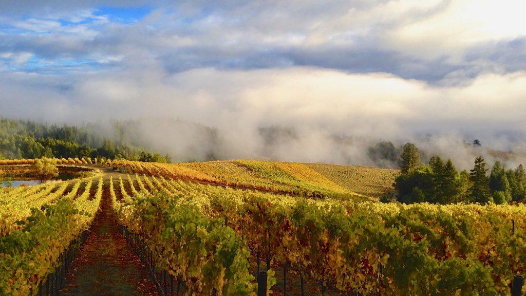 Alder Springs Vineyard, Mendocino County, California, Healthy Living + Travel