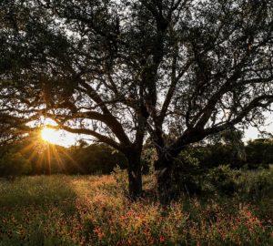 Natural Beauty, Lantana Spa at the JW Marriott San Antonio Hill Country Resort & Spa, Spas of America