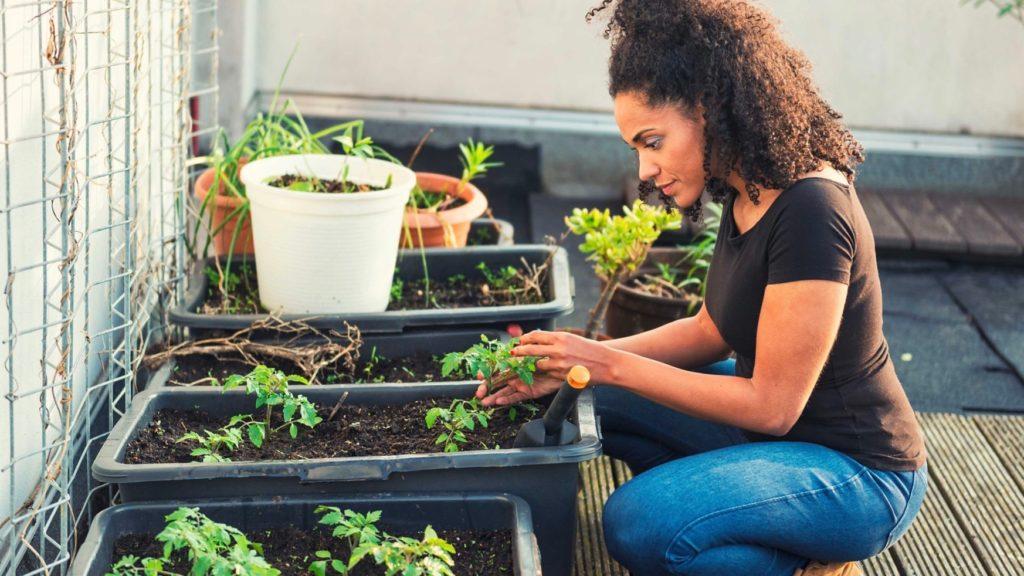 Gardening, Healthy Living + Travel (2)