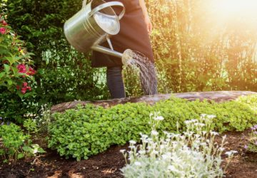 Gardening Therapy, Healthy Living + Travel